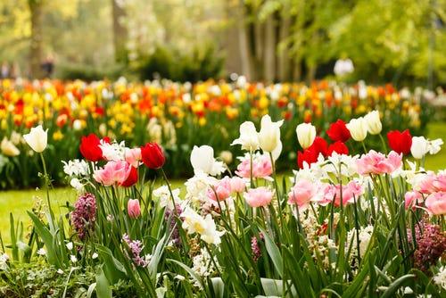 Spring Garden Photos