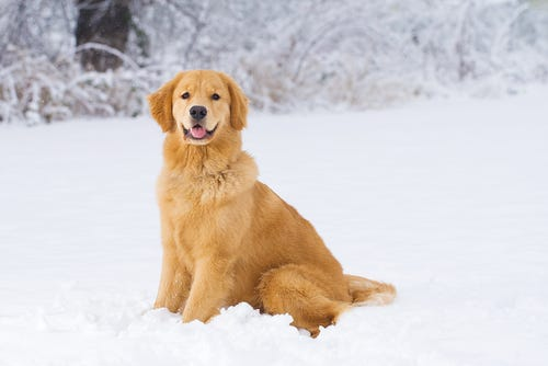 Winter pet care tips
