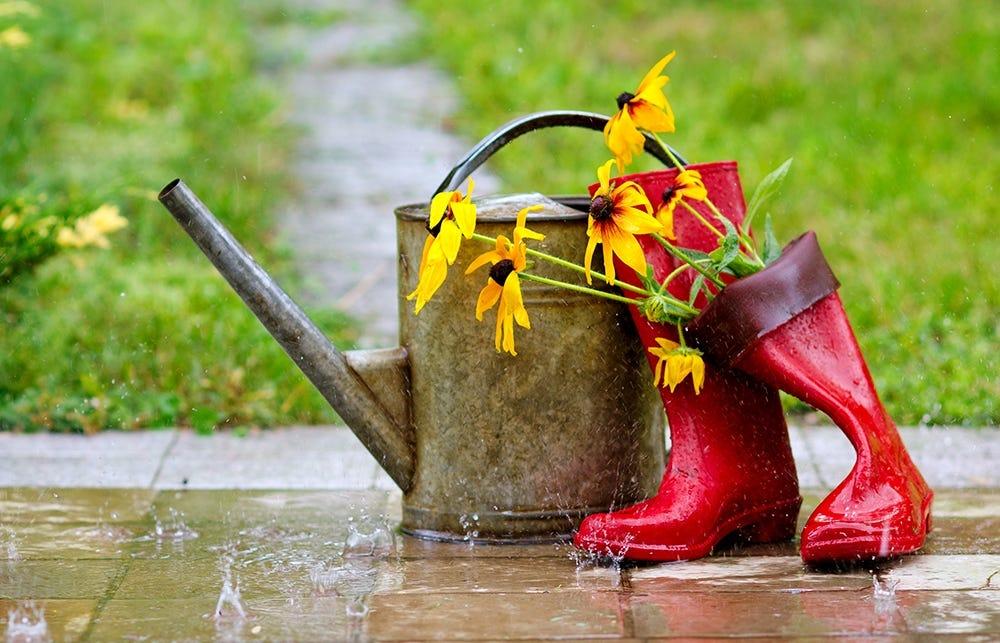 Rain in the garden