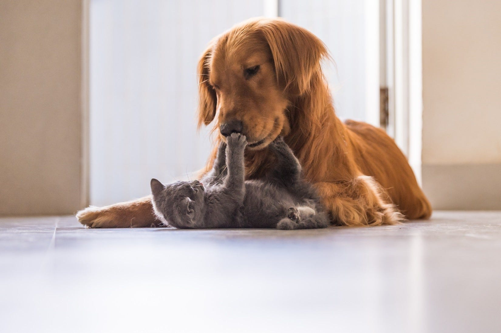 A dog and kitten playing