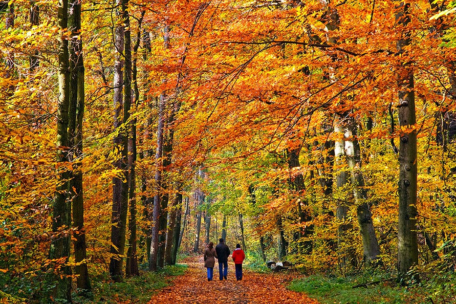 People walking through autumn trees
