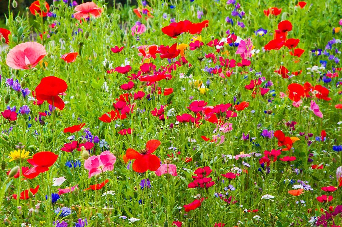 Bee friendly meadow