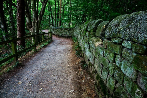 Country walking path