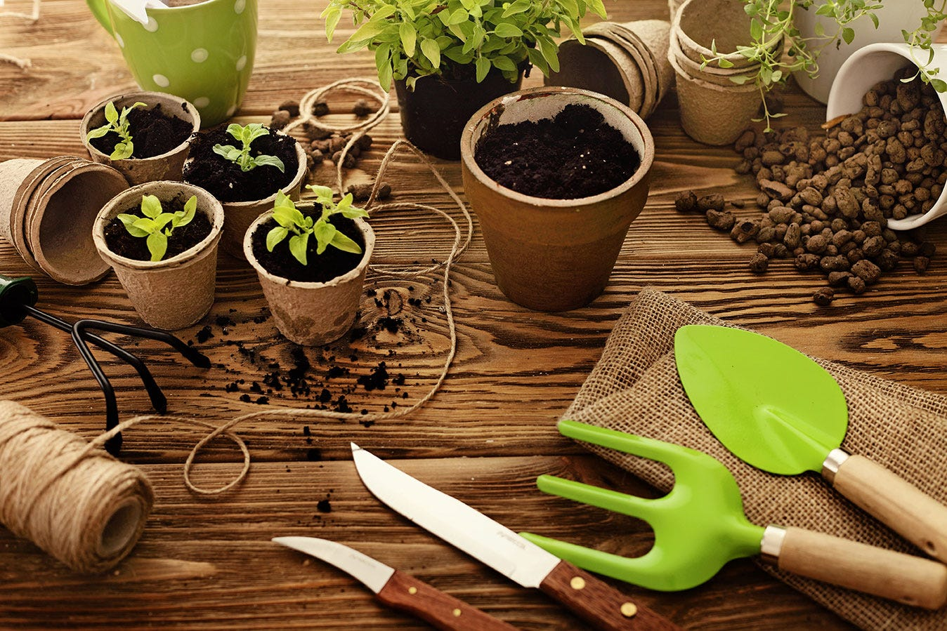 Pots, plants and gardening equipment