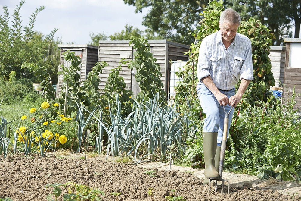 Man digging at allotment