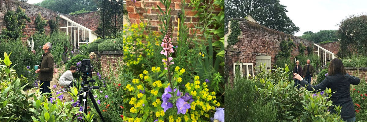 A collage featuring beautiful flowers in a walled garden and a photographer directing models