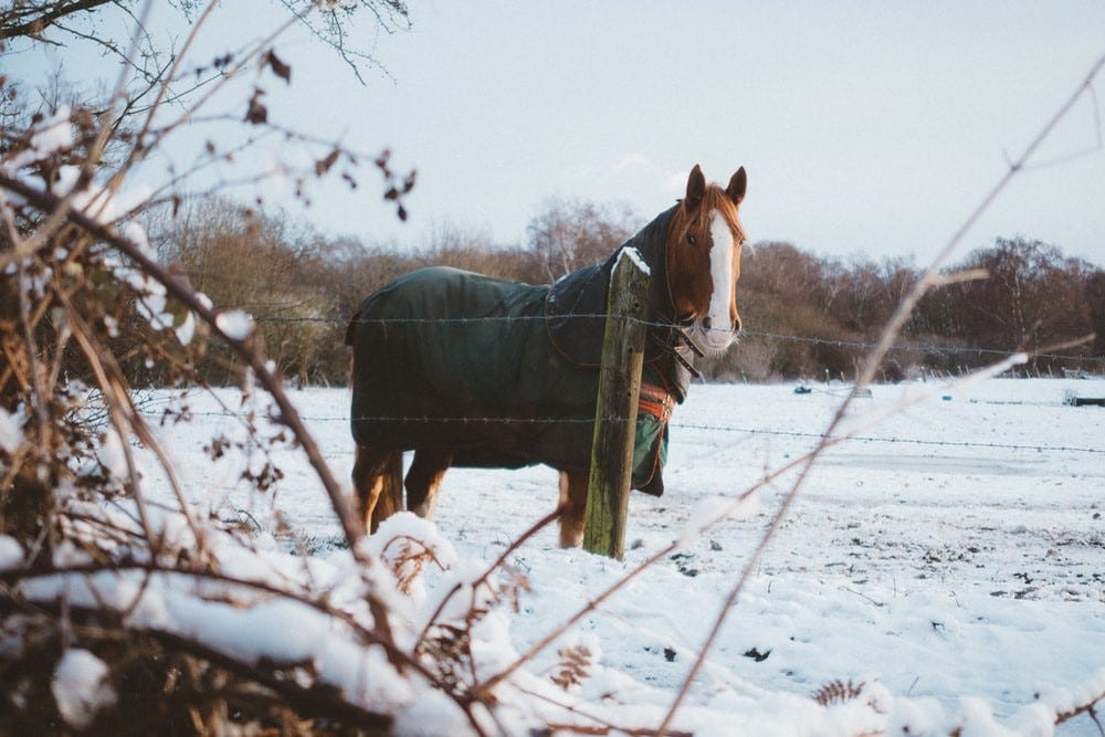 A horse outside in the snow