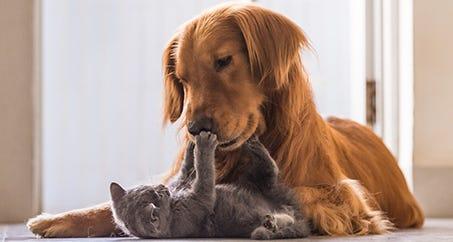 10 benefits of having a pet