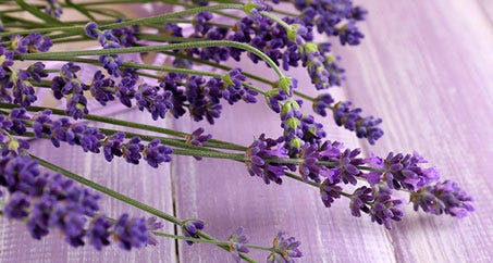 Enjoy Christmas calm with lavender